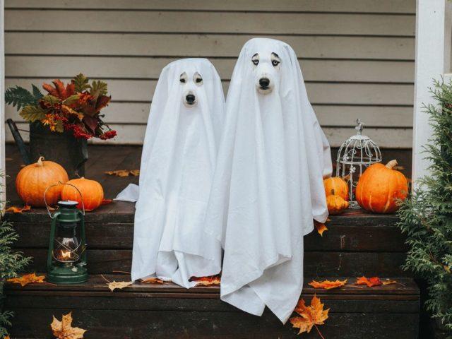 Halloween in Spanien – ¡Feliz Halloween !